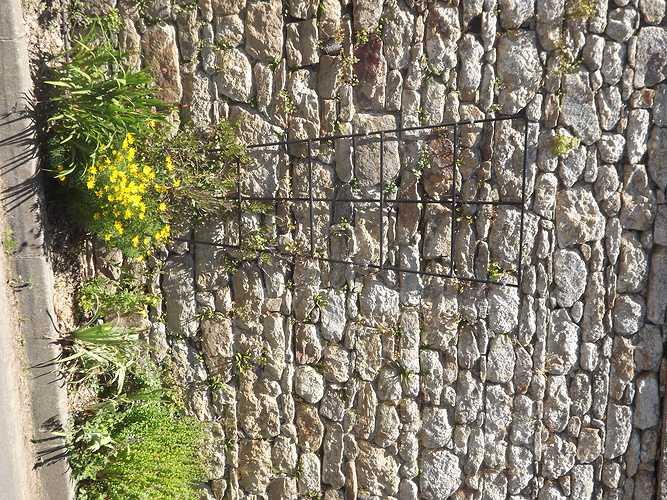 Jardinières- commune de Plouisy dscf4177